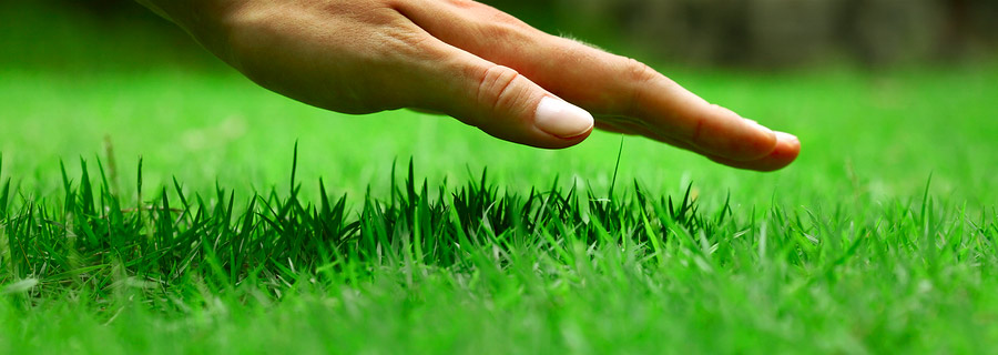How to care for your Emerald Lawn